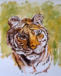 siberian tiger s