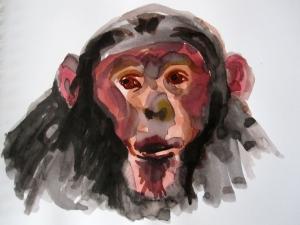 chimp 1s