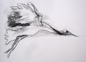 crane 5s