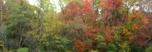 fall11s