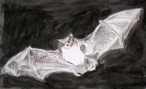 gray bat s