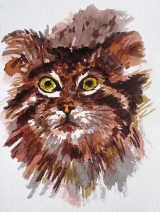 pallas's cat s
