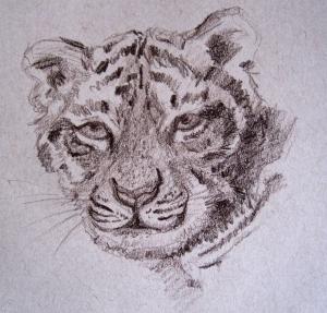 tiger pencil s