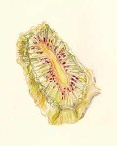 kiwi 3s