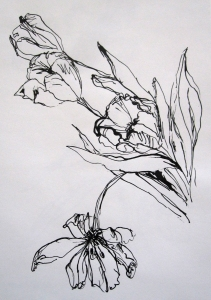 pen and ink tulips s