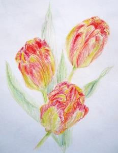 pencil tulips 2015 s