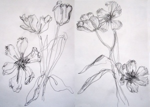 pencil tulips comp