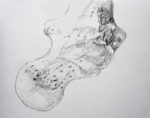 upper end of femur s