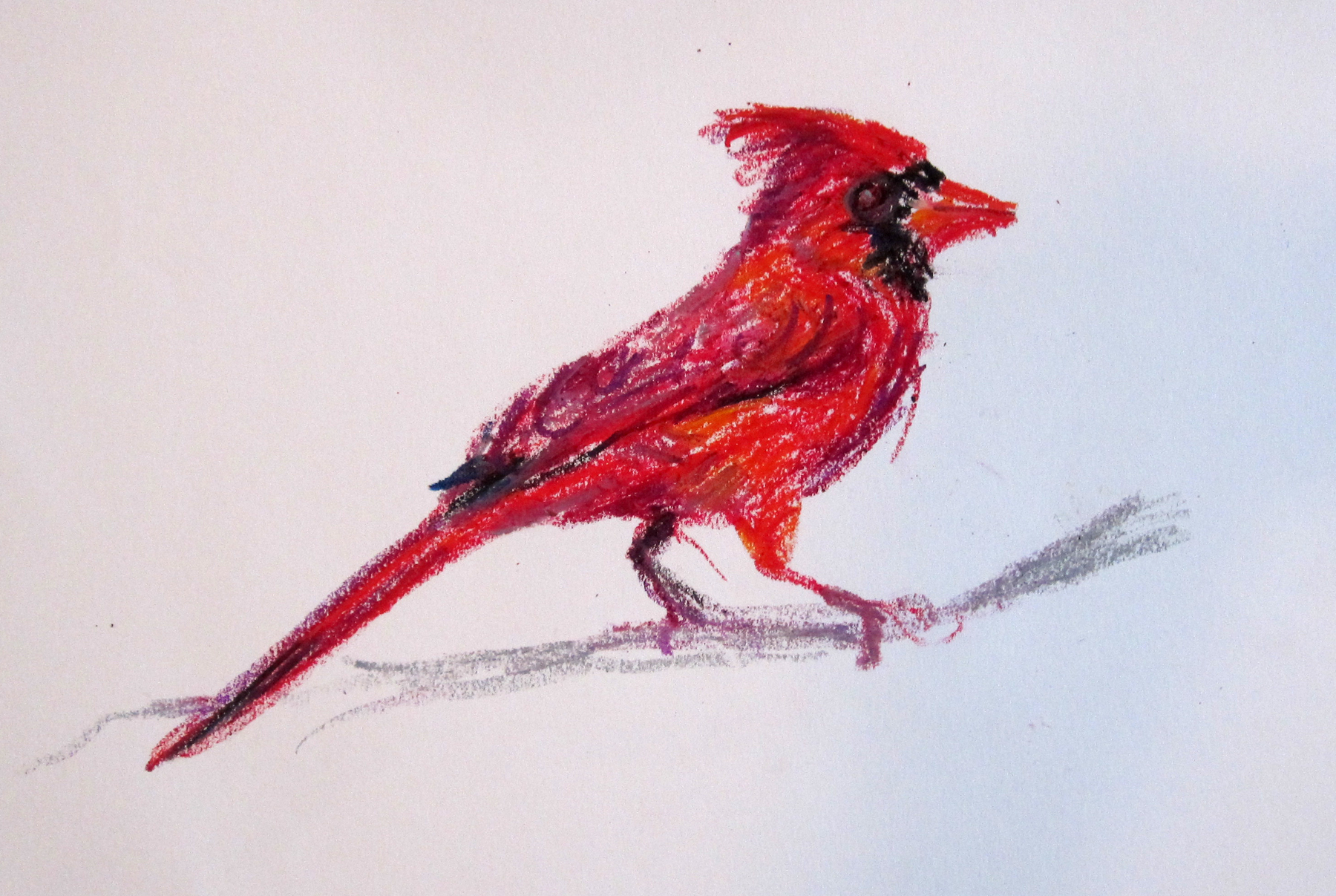 Crow Flying Upside Down Cardinal Drawing Craypas S