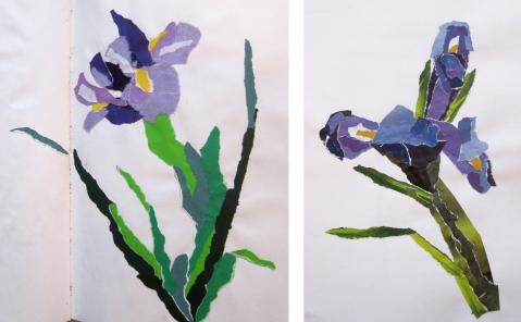 iris collage comp