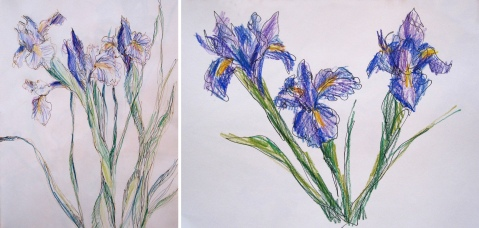 iris ink and pencil comp