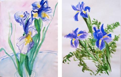 iris watercolor comp 1
