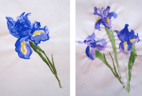 iris watercolor comp 2