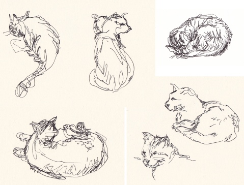 cats comp 2