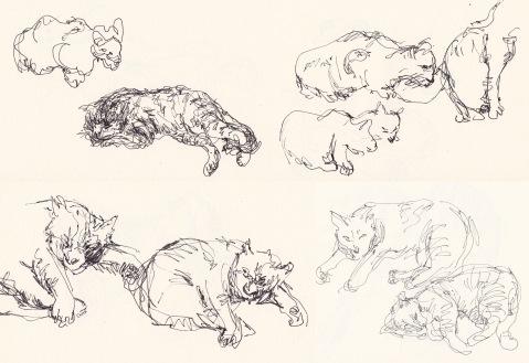 cats comp 3
