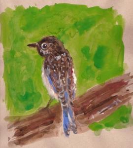 baby bluebird s