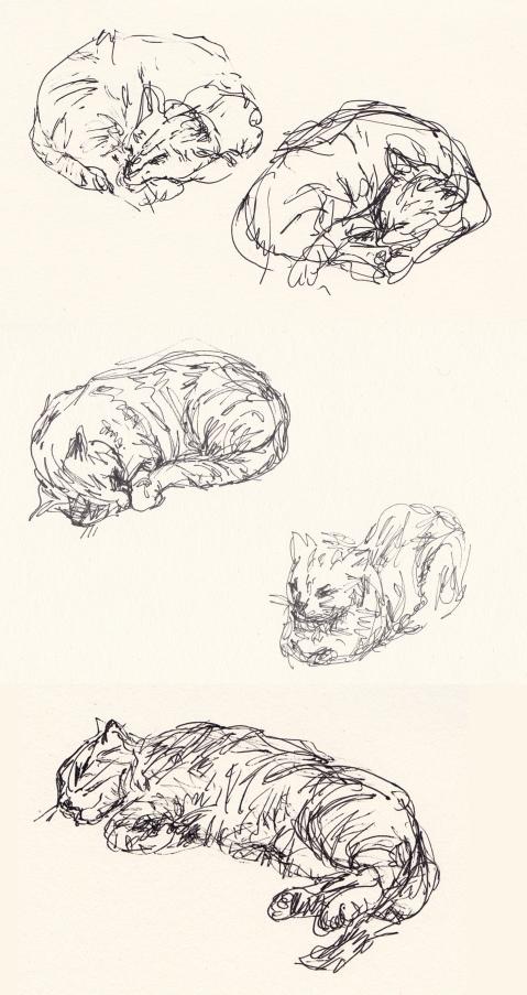 cats comp 4
