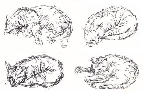 cats comp 5