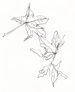 sweetgum leaves s