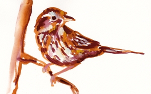 brown song sparrow s