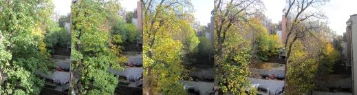 trees across summary comp