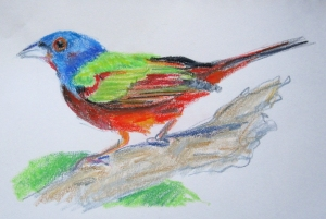 painted bunting neocolor 1s