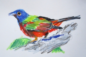 painted bunting neocolor s