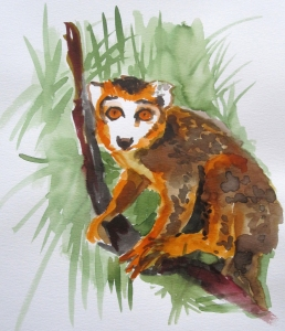 crowned lemur s