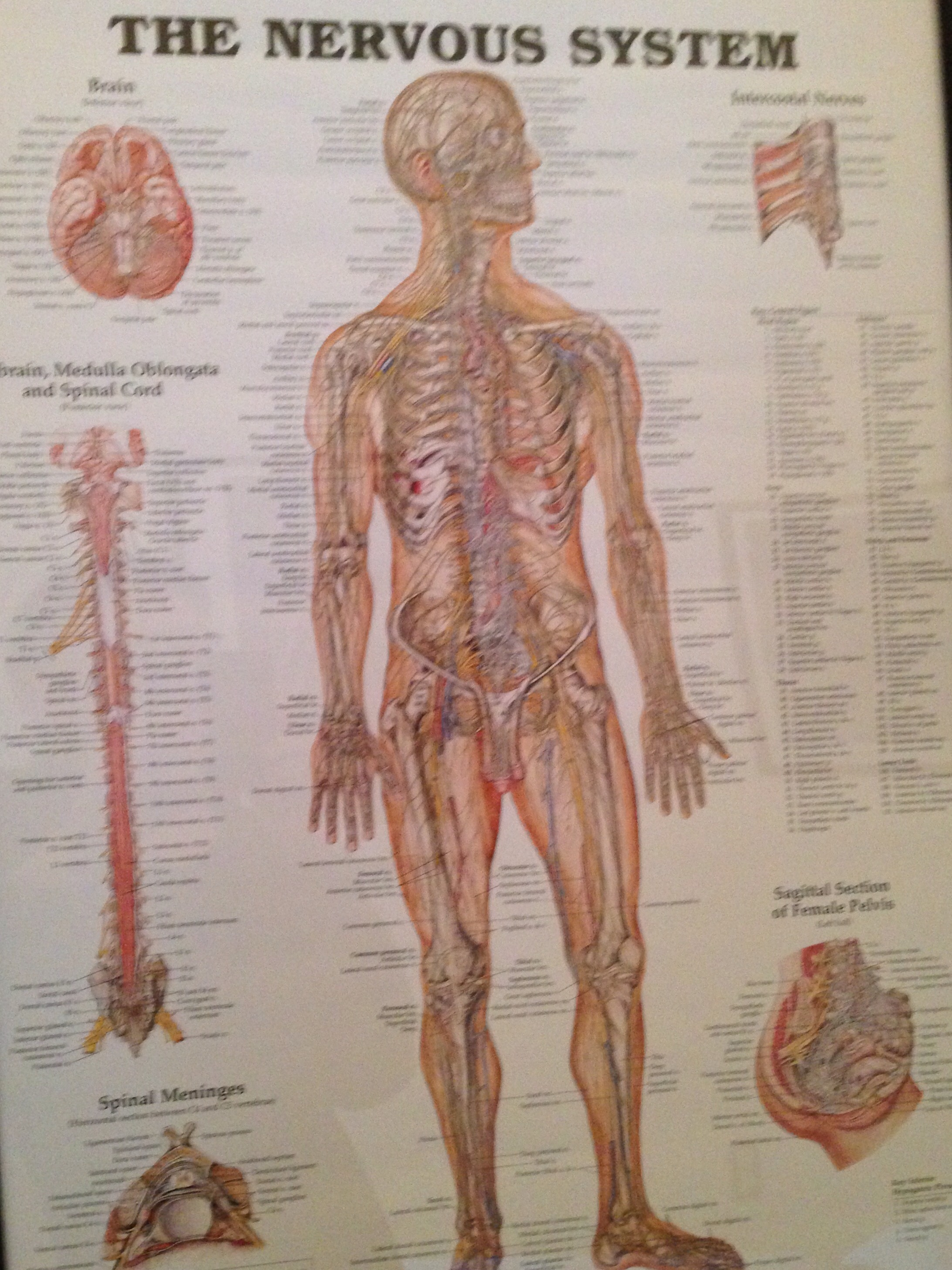 Anatomical posters   method two madness