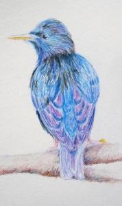 pencil starling 2s