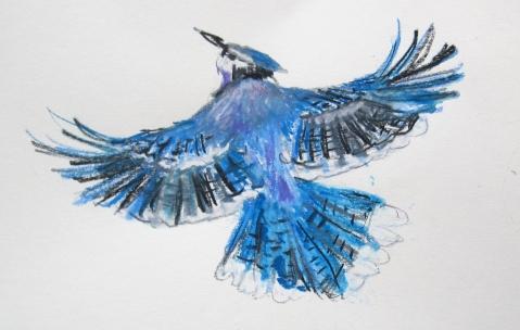 blue jay neocolor s