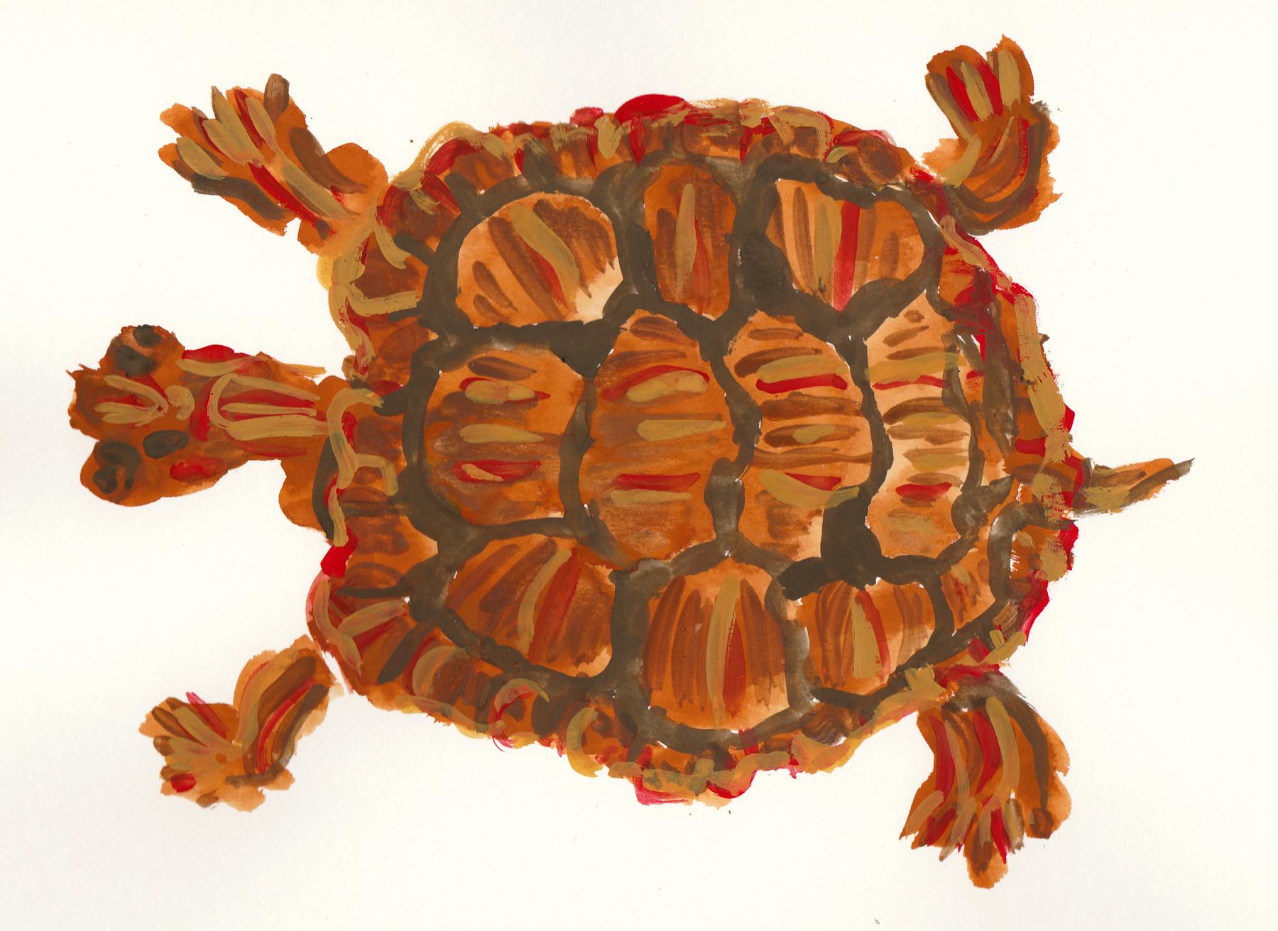box turtle s