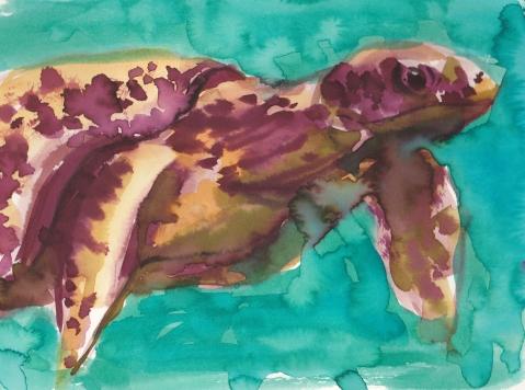 sea turtle s