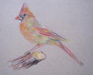 pencil cardinal s