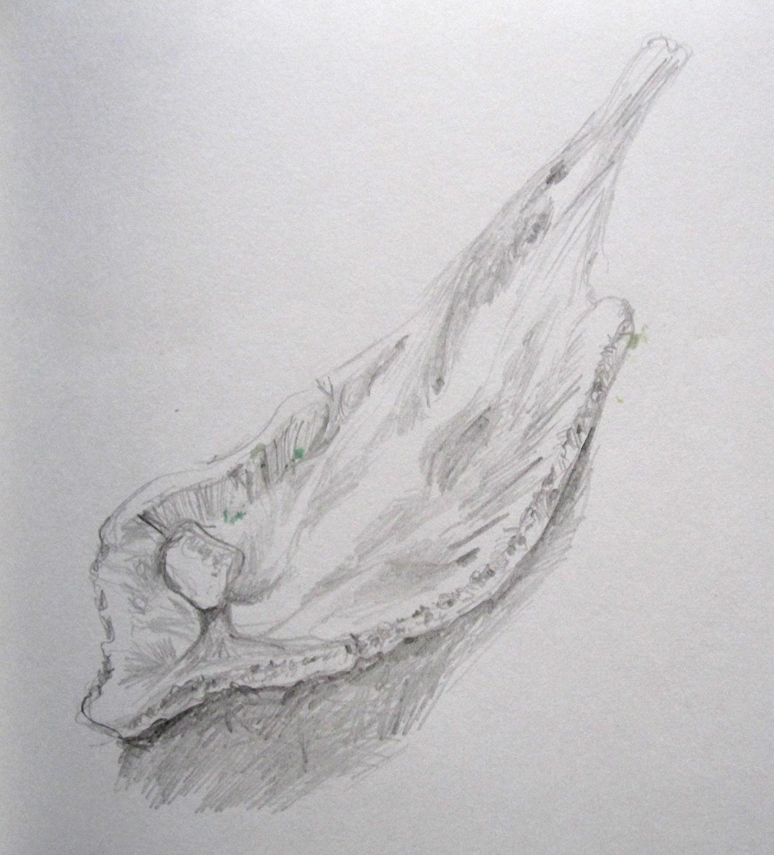 bone sketch bottom s