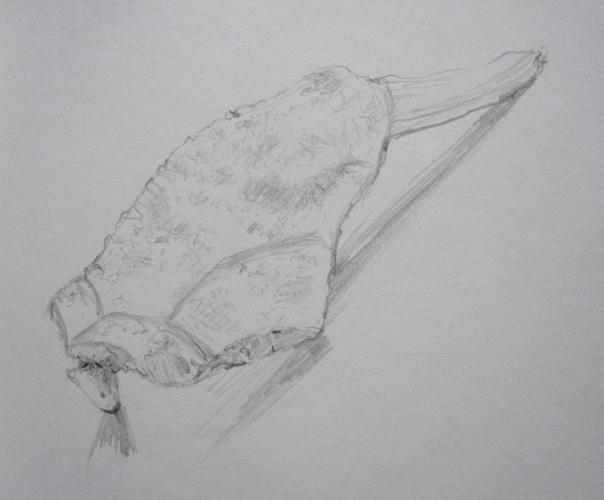 bone sketch top s