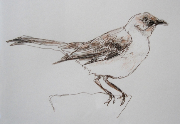 mockingbird drawing s
