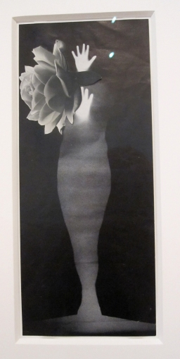 jay defeo  photo collage s