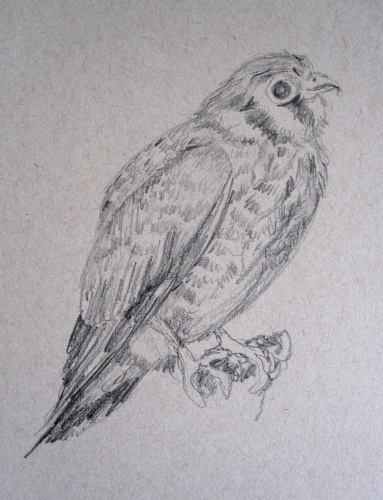 kestrel-pencil-s