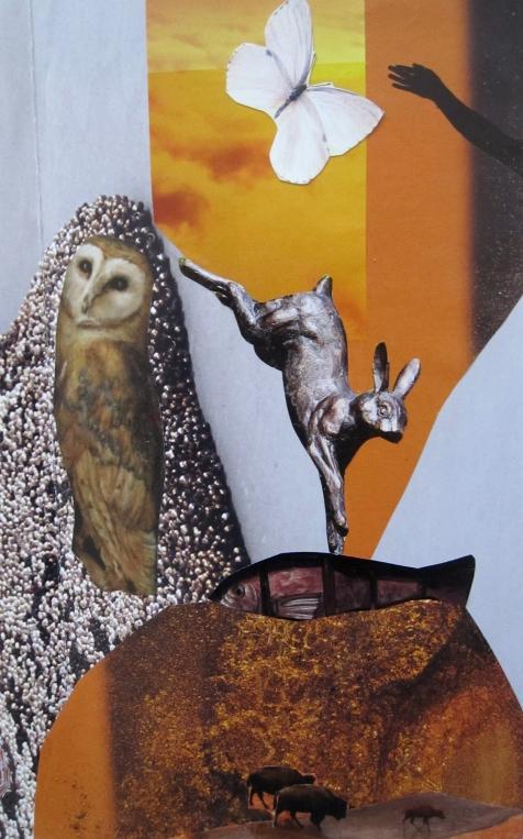 owl-close-up-s