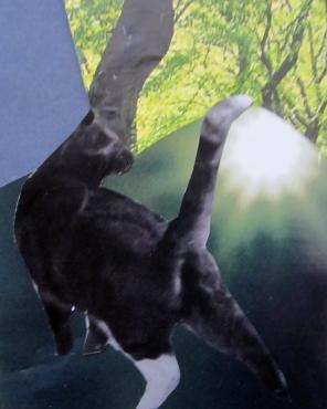 5-cat-s
