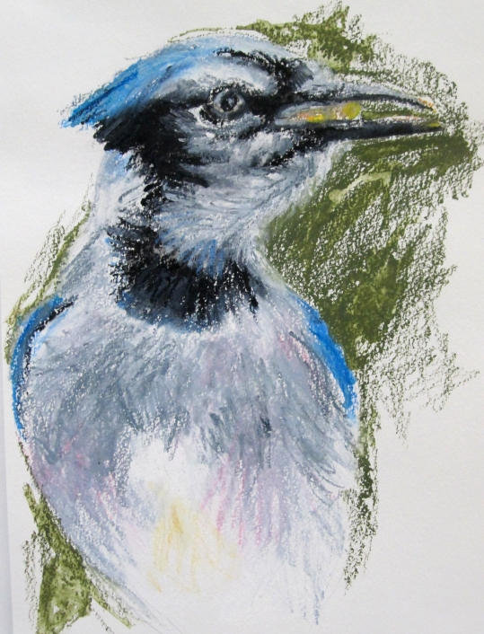 blue jay head s