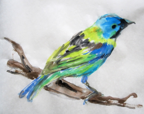 green headed tanager s