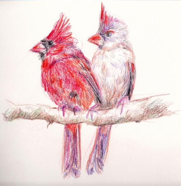 cardinal sketch scan s