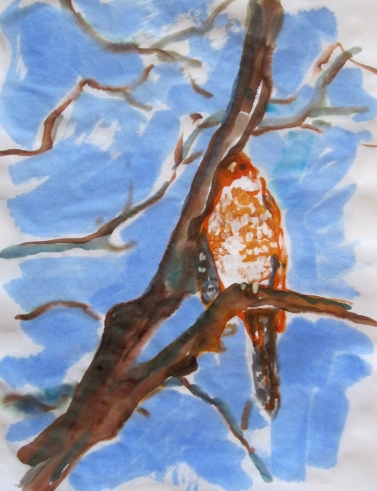 hawk watercolor s