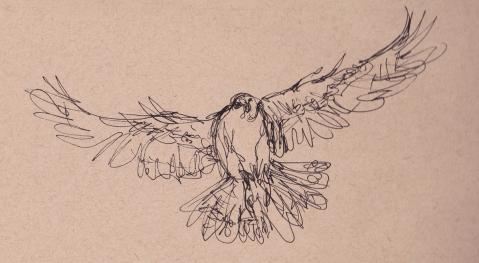 falcon flight s
