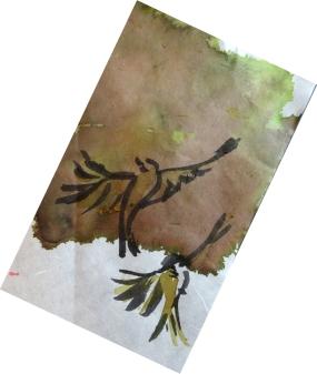 sparrows 2 s