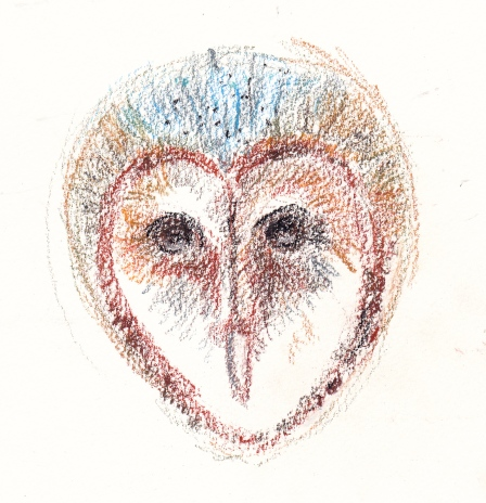 barn owl face s
