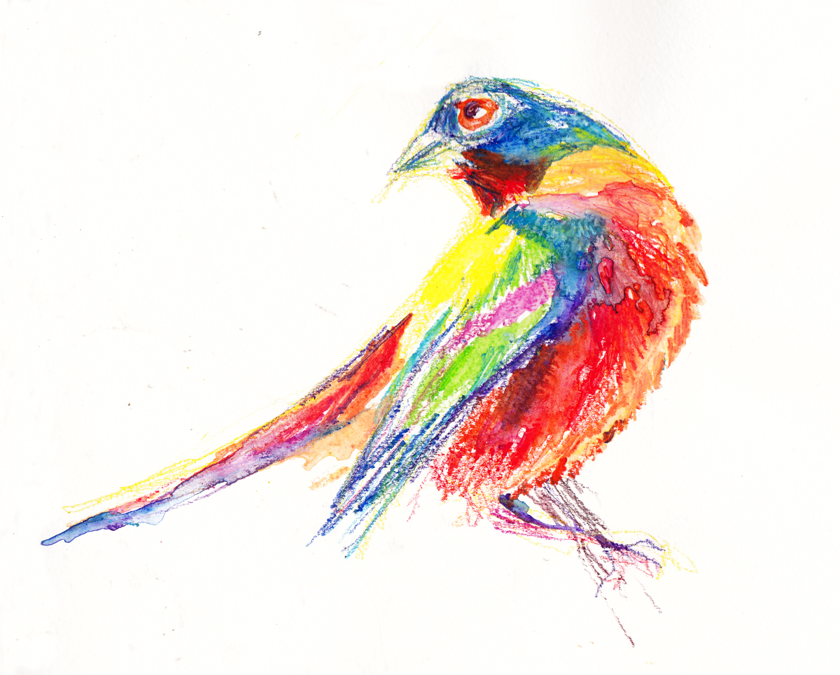 painted bunting s