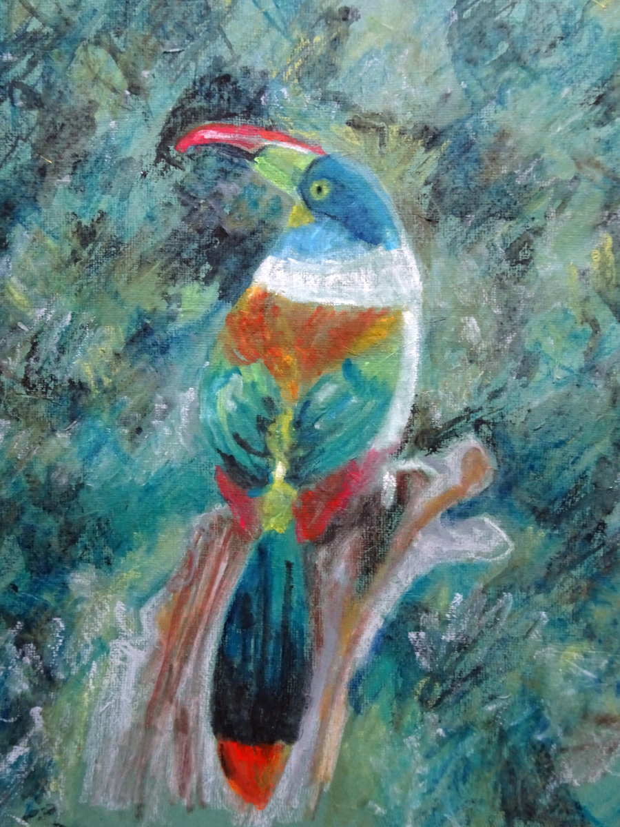 mountain toucan close up s